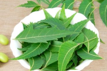 Neem (Indian Lilac) Scientific Name and Medicinal Uses in Everyday Life